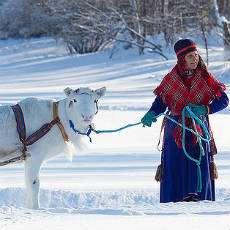 Samisk kvinna med ren.